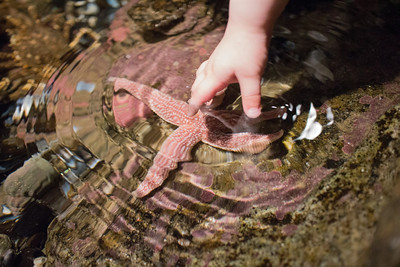 The touch tank was very cold but Hattie sucked it up for the starfish.