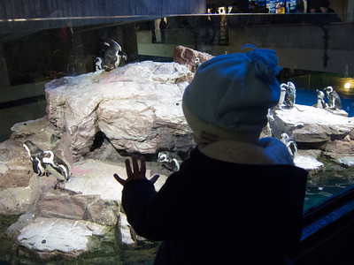 Hattie loved the penguins