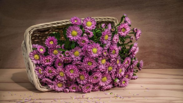 Beautiful Flowers Wallpapers for Laptop