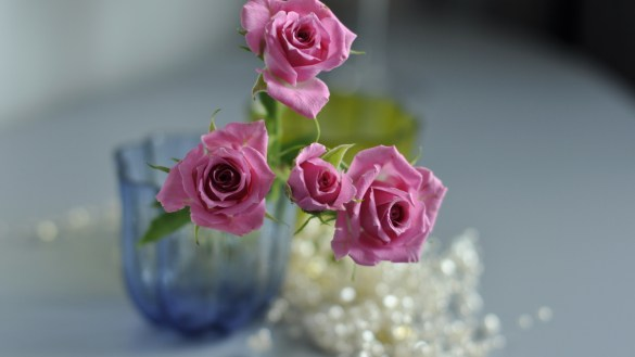 High Definition New Rose Flower Wallpapers