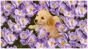 Cute Listening Music Dog images photos