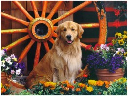 Dog with Flowers images photos