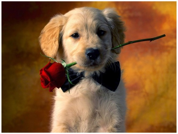 Dog with Flowers images