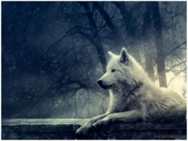 HD Wolf Wallpapers 1920x1080