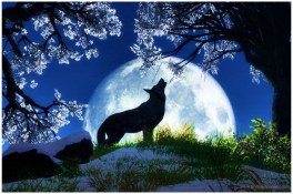 Wolf HD Images Backgrounds