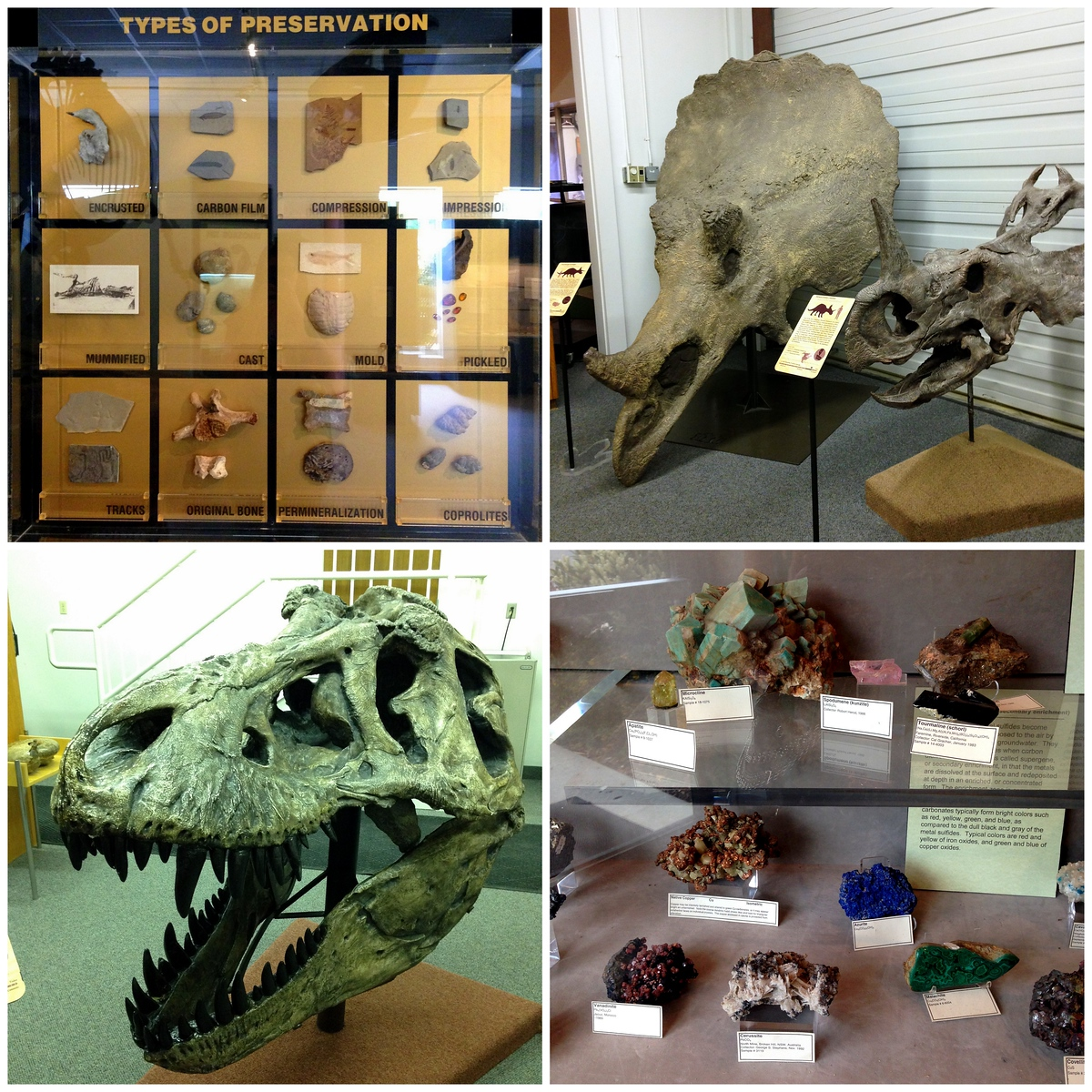 Various Rocks, Minerals, Fossils and Dino Bones on Display at the BYU Museum of Paleontology in Utah
