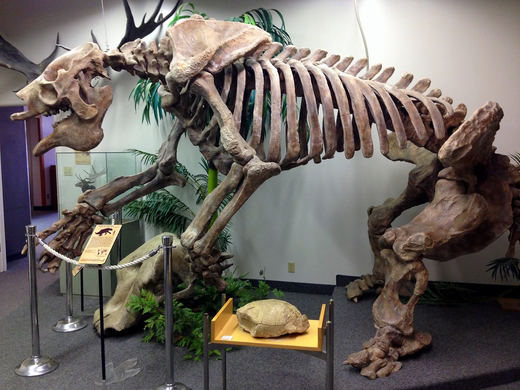 Giant Prehistoric Sloth Skeleton at the BYU Museum of Paleontology in Provo, Utah