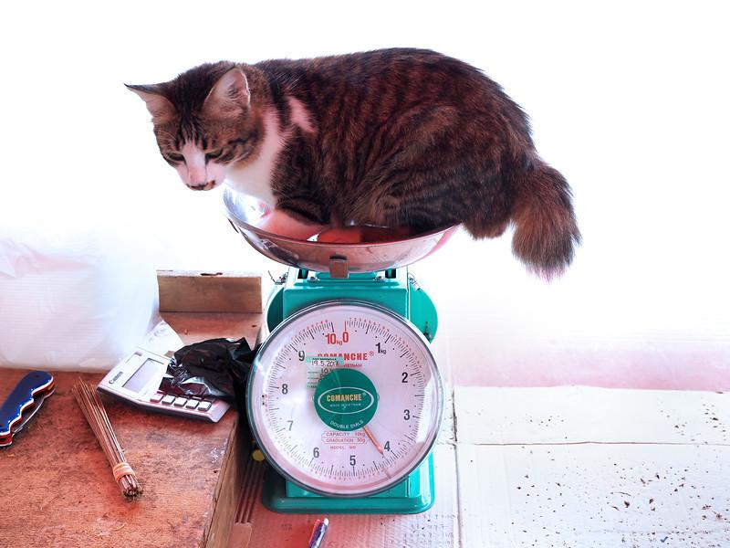 fatty the cat