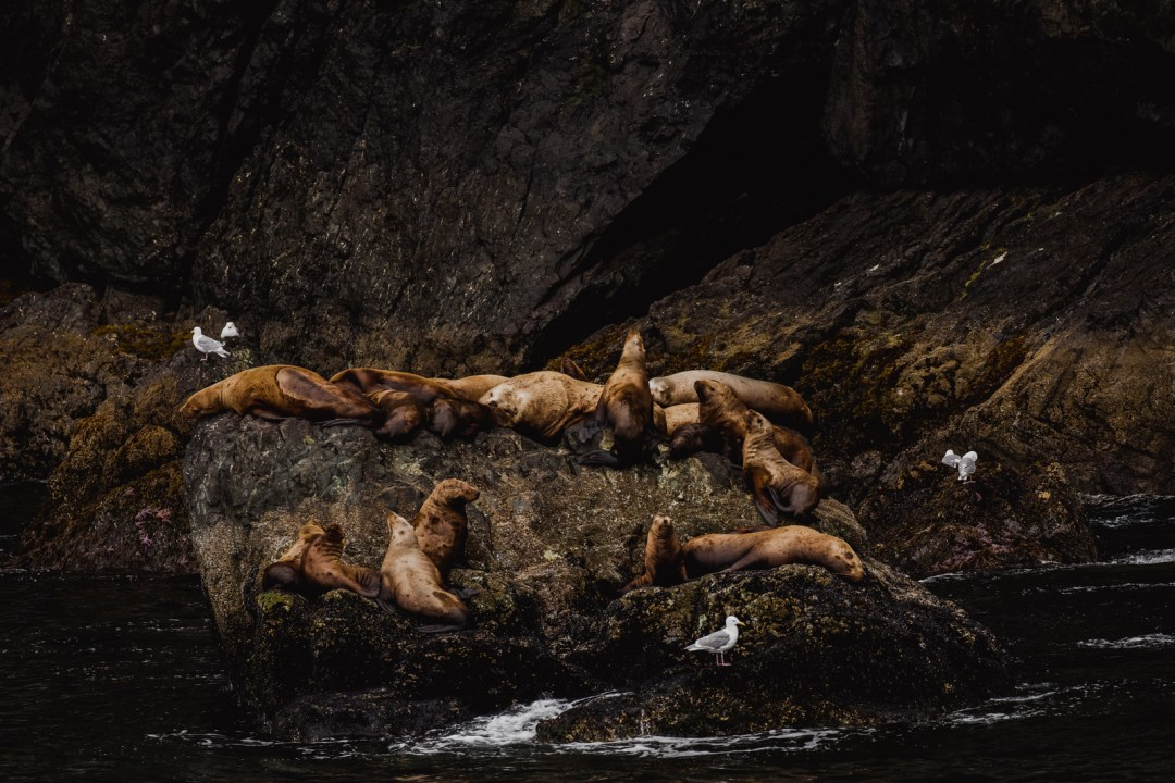 Sea Lions resting in Resurrection bay during  a major marine tour of Kenai Fjords National Park out of seward, Alaska. Taken by Kimberly Kendall of Clicking with Kim