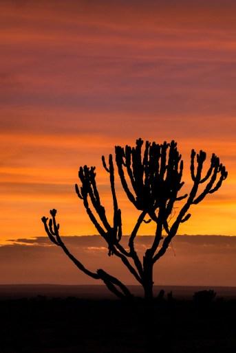 sunrise in Maasai Mara