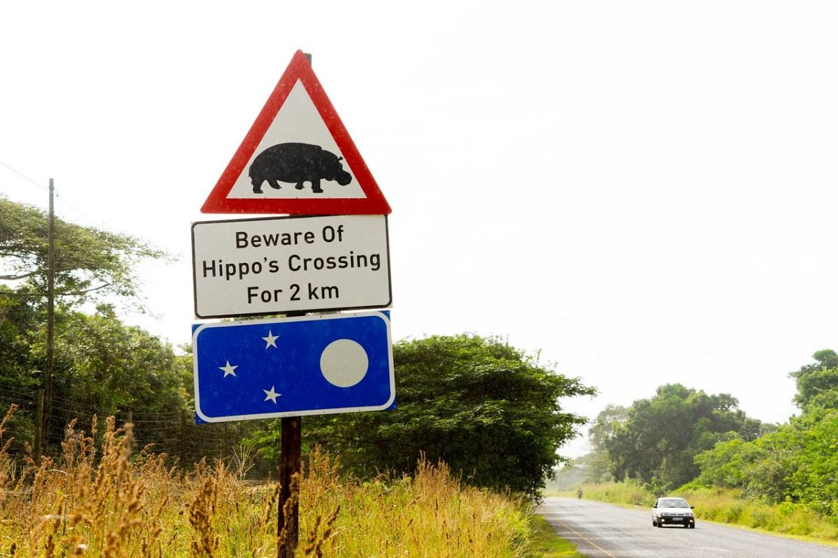 selvkørende safari i sydafrika