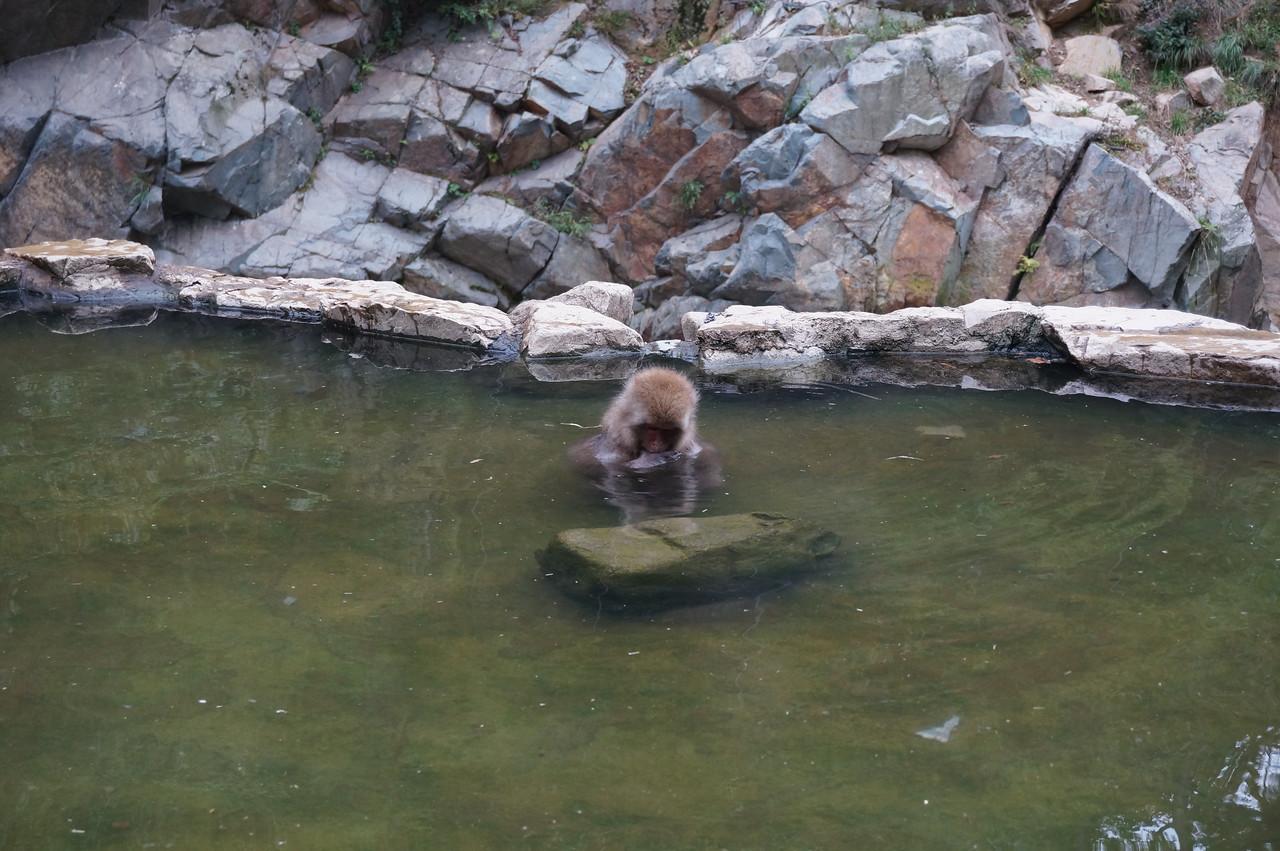 The famous bathing monkeys