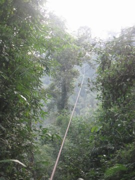 ziplines at gibbon experience review
