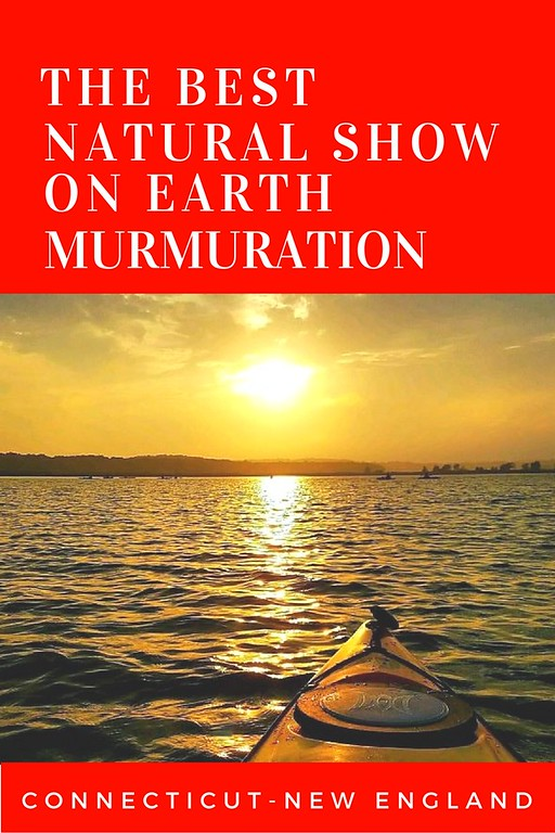 The Best Natural Show On Earth...Murmuration!