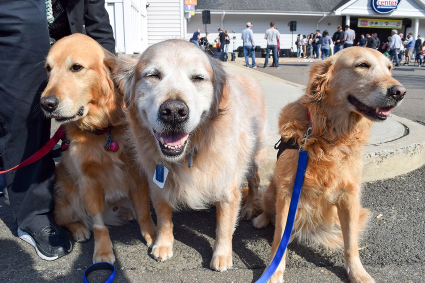 Educated Canines Assisting with Disabilities