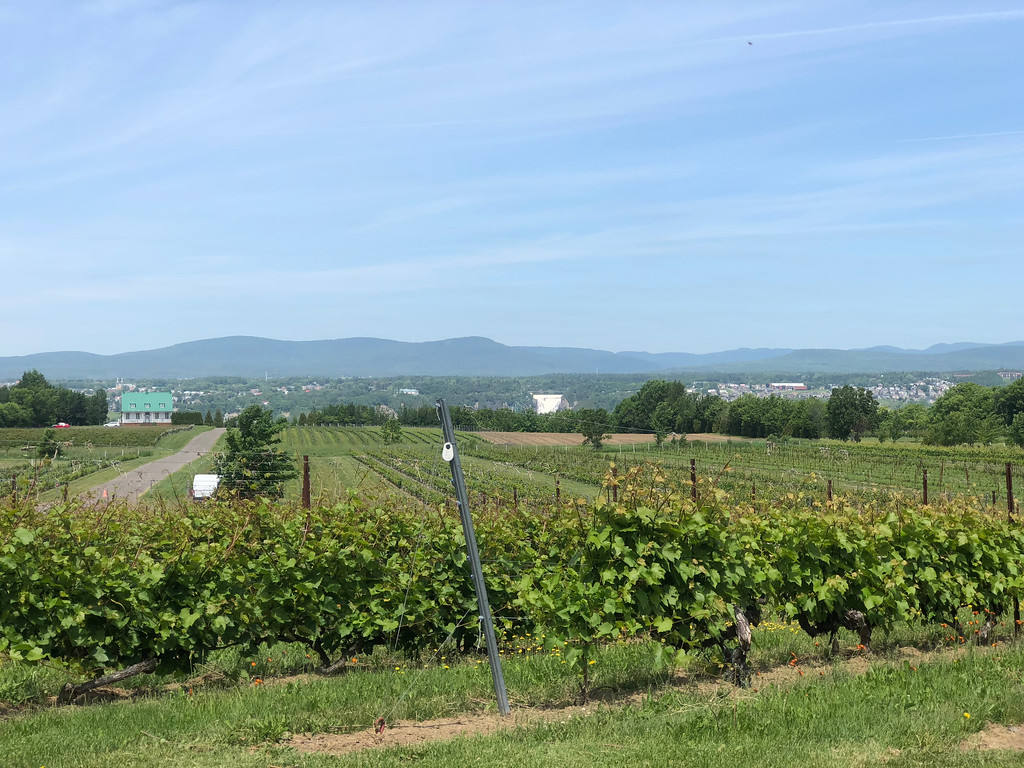 Vignobles Saint-Pétronille winery on Île d'Orléans, Québec