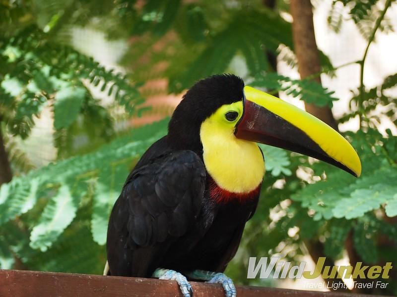 costa rica itinerary - toucan