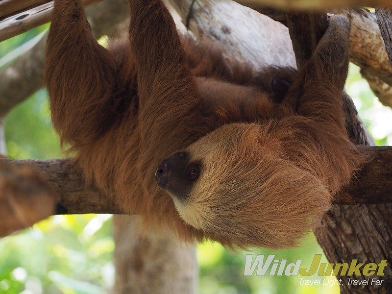 one week in costa rica - costa rica itinerary - sloth sanctuary