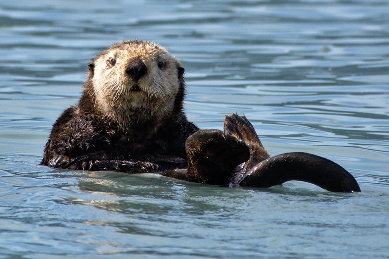Hello Otter
