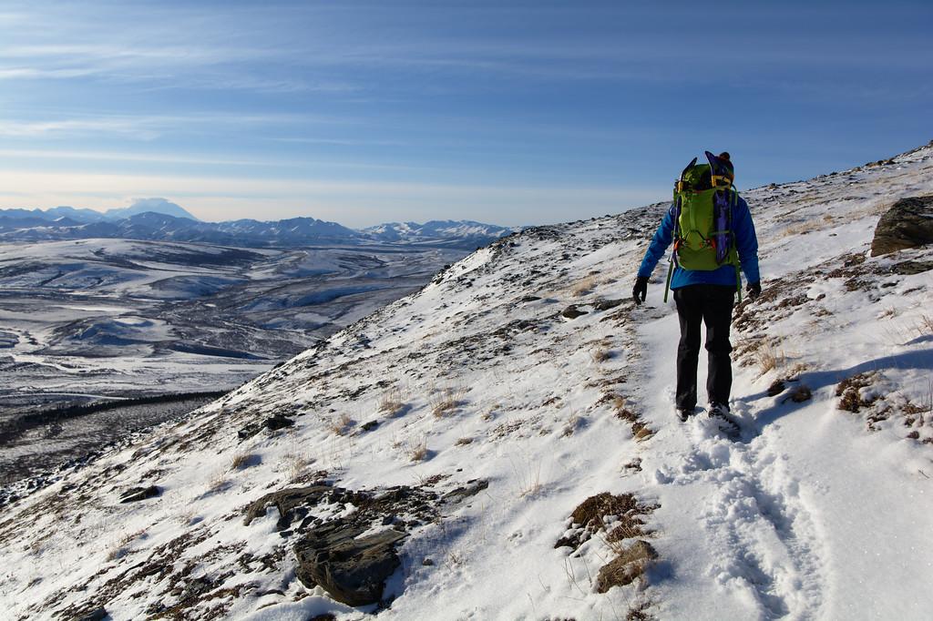 Hiker on the Savage Alpine Ridge with Denali on the horizon