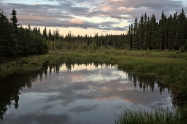 Reflection at Horseshoe Lake, one of the Denali National Park Entrance Trails