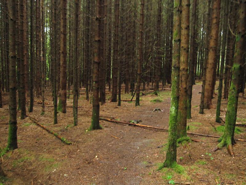 walking paths near Loch Ness