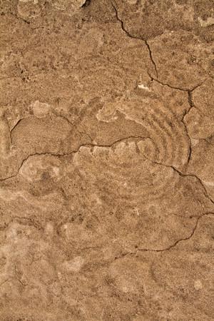 Clamshell petroglyphs
