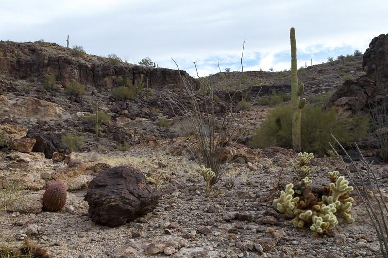 """Eagletail"" Wilderness Petroglyphs"