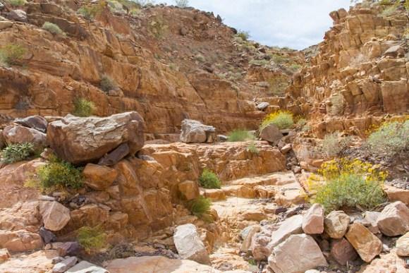 Camel Track Canyon