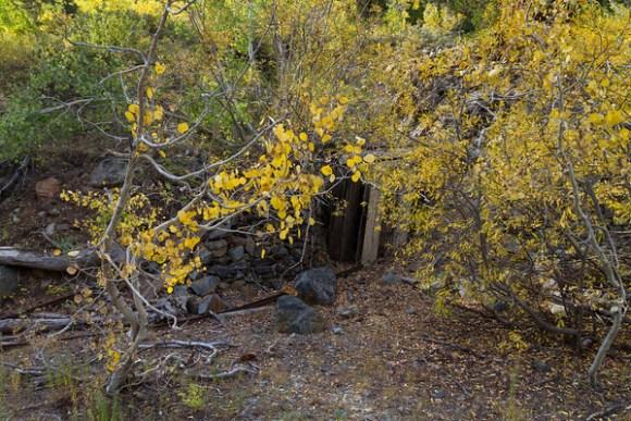 Yellow Rose Mine