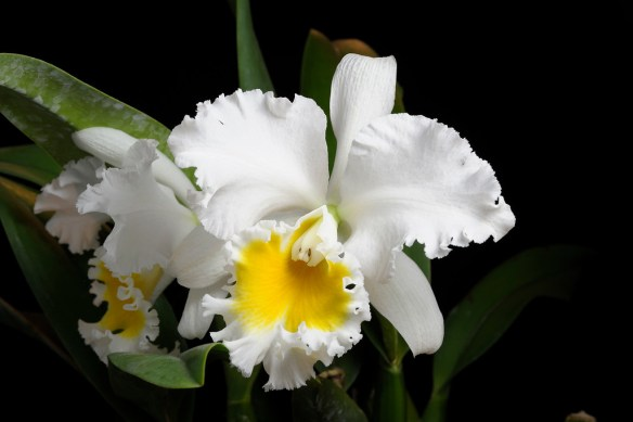 Blc. William Gee Grade A