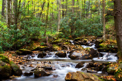 Creek in the Forest