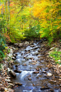Creek in the Fall