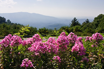 Blue Ridge Mountains with Pink Flowers