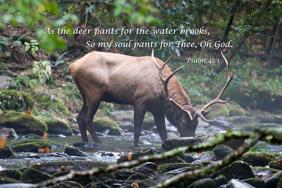 As the deer pants for water...