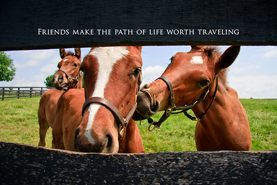 Friends make the path of life worth traveling