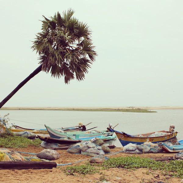India palm tree boats