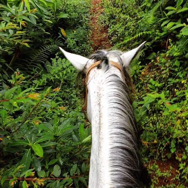 Colombia horse