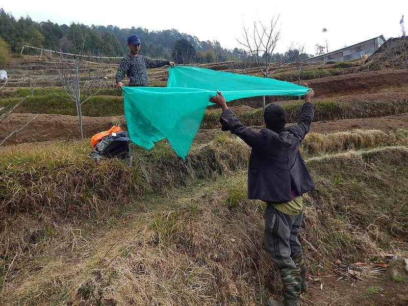 men covering fruit trees with tarps in Nepal