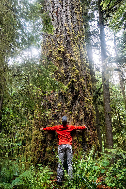 Cathedral Grove Vancouver Island