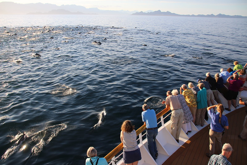 Super Pod of Dolphins - Sea of Cortez - Mexico