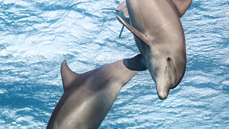 dolphin-reef_102_224e1085