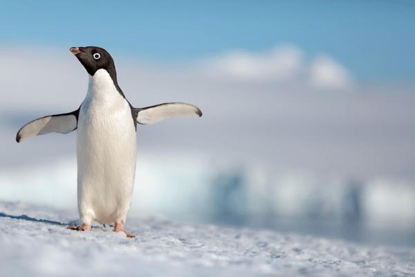 disney nature penguins
