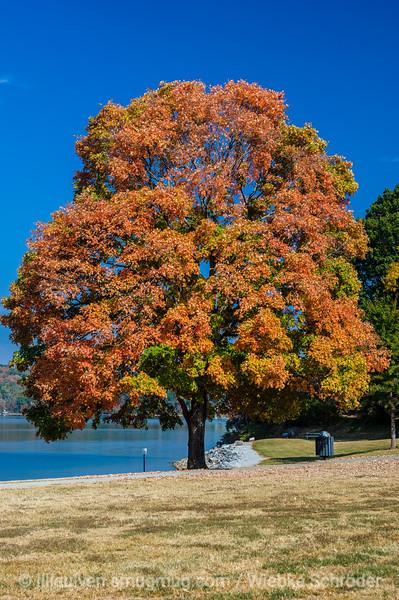 Fall colors at the Chickamauga Dam