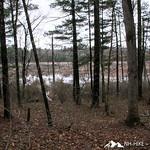 Phyllis Massey Stafford Conservation Area 21