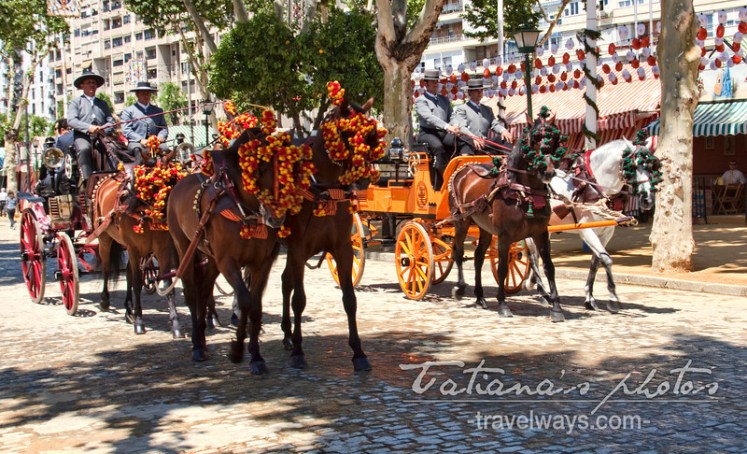 Andalucian horses in Seville, Spain