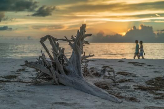 Driftwood on the Coast