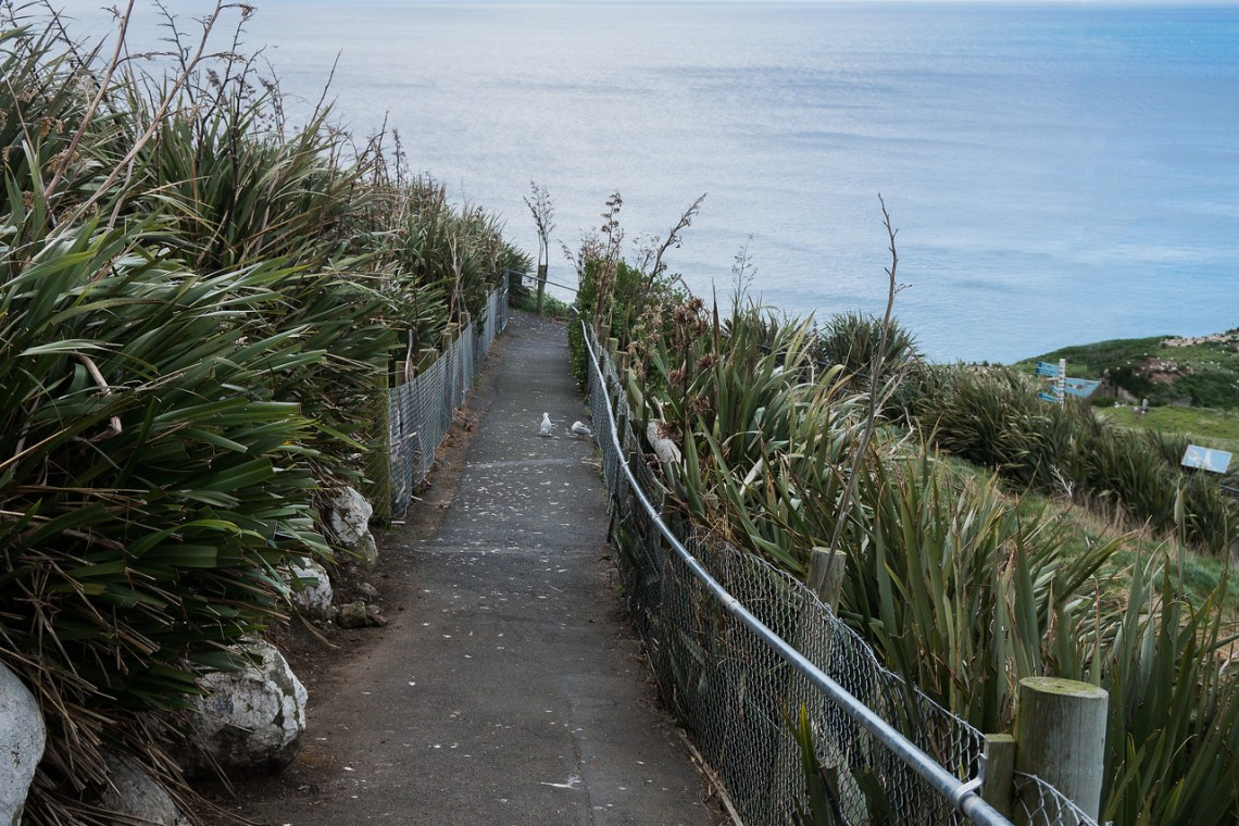 Path up to viewing bunker at Royal Albatross Centre