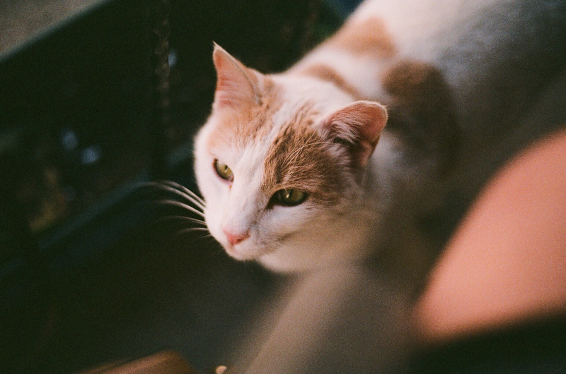 cat, film for travel photography