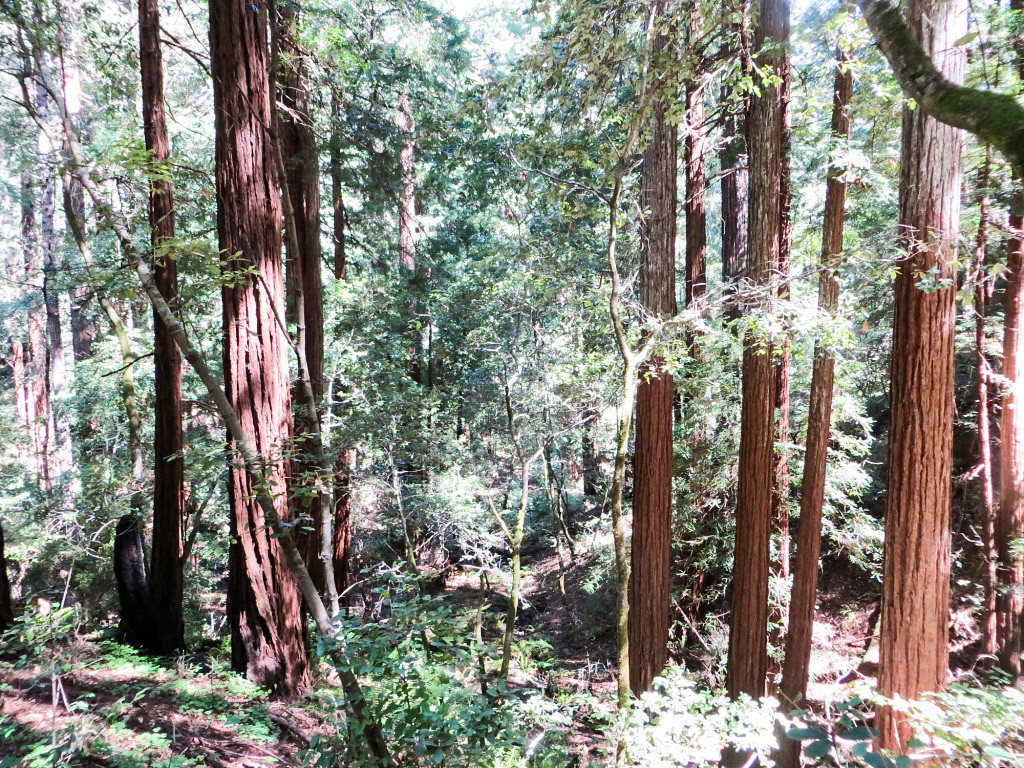 views of muir woods and sausalito